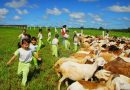 UK Farm – 新婚人士取景拍摄的好地方
