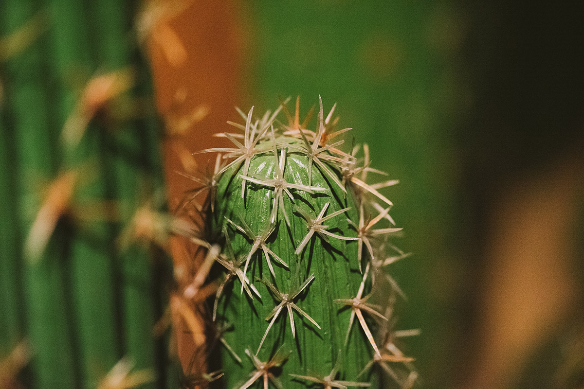 cactus-canyon-1
