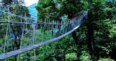 马来西亚森林研究局 Forest Research Institute Malaysia(FRIM)